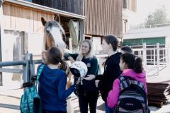 Pferdehof Klasse Jerg 2017